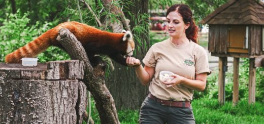 devenir soigneur animalier